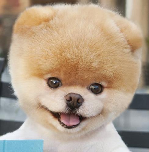 世界上最帅的动物