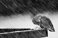 连李彦宏都参加真人秀 巨头在寒冬期也艰辛