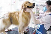 """另类""""网红""""王可可:王思聪宠物犬的掘金之路"""