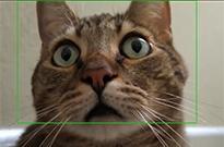 Google Photos现在可以识别你的宠物了