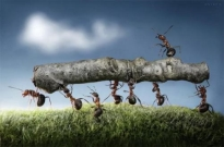 支付宝蚂蚁森林航拍 网友:干一件改变世界的大事