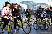 """从""""自行车王国""""到""""共享单车王国"""",凤凰、飞鸽们该怎么办?"""