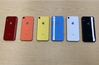 苹果:iPhone XR今天正式开订 6499元起