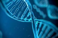 """""""世界首例基因编辑婴儿""""引发争议,项目申请人贺建奎名下有多家基因公司"""