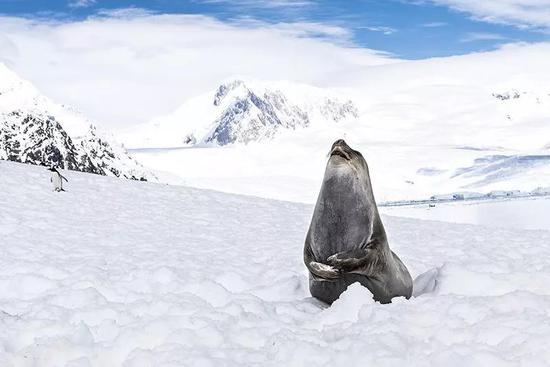 佩戴传感器的象海豹将帮助研究人员收集海洋数据,此举旨在研究南极的思韦茨冰川(Thwaites Glacier)