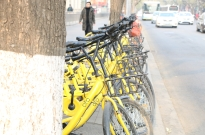 ofo崛起又急落,共享单车真的是愚蠢业务吗