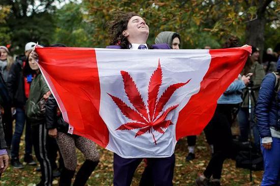 加拿大将迎来大麻研究的结果丰收季。