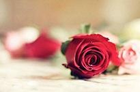 """情人节催热""""浪漫经济"""" 鲜花消费成为年轻人日常悦己方式"""
