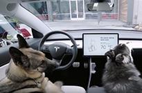 """特斯拉推出了""""狗狗驾驶模式""""?"""