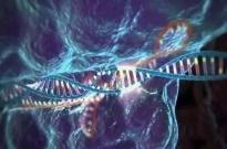 """基因编辑何去何从?""""全球暂停""""不是永久禁令"""