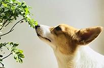 宠物经济:铲屎官挖出2000亿的大生意