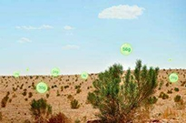 5亿人3年种树1亿棵 蚂蚁森林:要让10亿人行动起来
