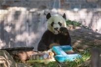 饭圈文化入侵各行各业:连大熊猫都开始有站姐了