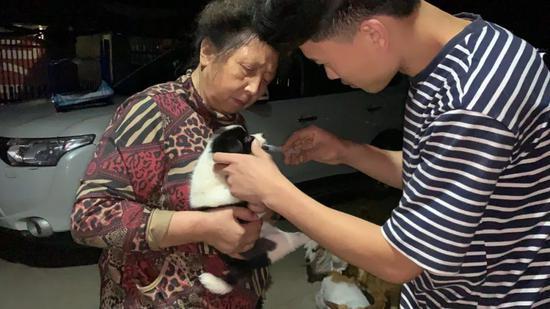 志愿者给救下的小狗喂食营养液。