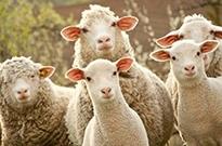 """职业化""""薅羊毛""""影响平台经济健康发展"""