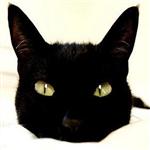 黑猫777